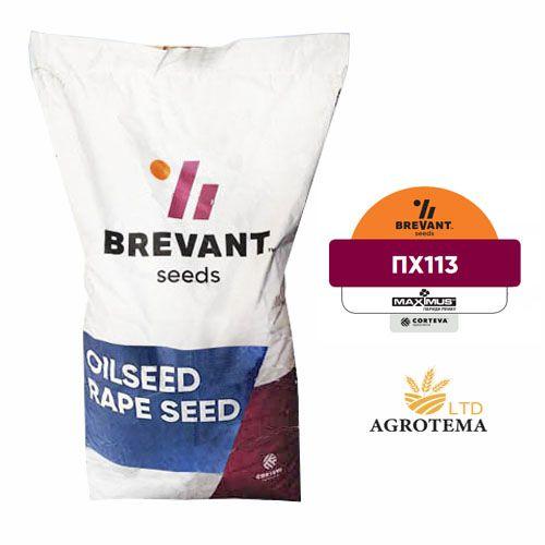 Семена рапса ПХ113